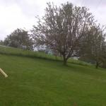 Apfelbaum 4